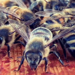 Bee freindly hive tours