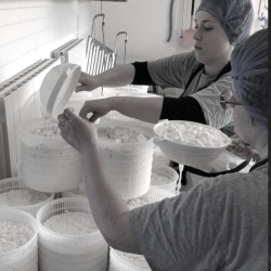 our cheesemakers
