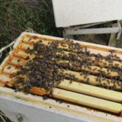 our bees