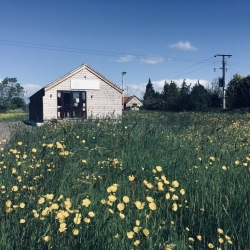 Our store buttercup meadow!