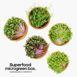 Superfoood Microgreen Box