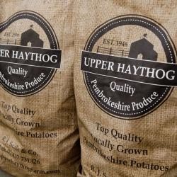 Upper Haythog Farm Pembrokeshire Potatoes