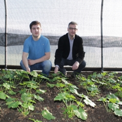 Growing Wasabi in the Polytunnel