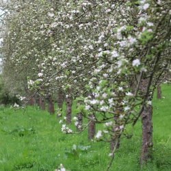 Using fruit grown ourselves, in our unsprayed orchards.