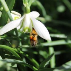 Fawkham Bee Company