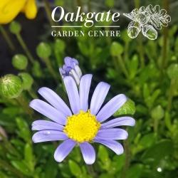 Oakgate Nursery & Plant Centre Ltd