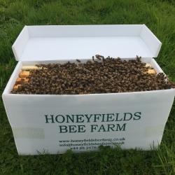 Honeyfields Bee Farm