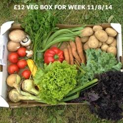 East Coast Organic Boxes