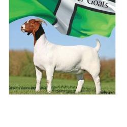 Westcott Boer Goats