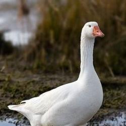 J C Poultry