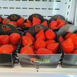 Hackers Fruit Farm