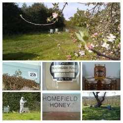 Homefield Products