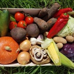 Elmar Vegetables
