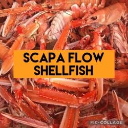 Scapa Flow Shellfish