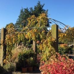 Annetts Garden Centre