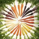 Crunchy Carrot Grocer & Veg Box