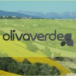 Olivaverde Olive Oil