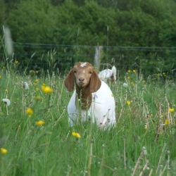 Bere Marsh Organic Farm