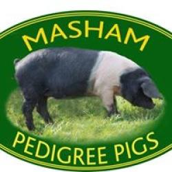 Masham Pigs