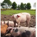 Farrowby Farm & Ashwell Delicatessen