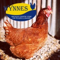 Wynne's of Dinmore