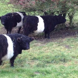 Ryedale Rare and Native Breeds