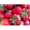 Strawberry Grange