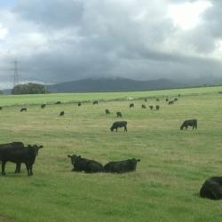 Hollowood Farm