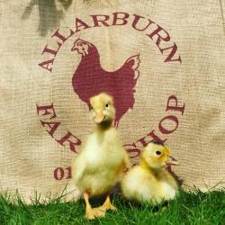 Allarburn Farm Dairy Ltd