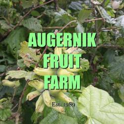 Augernik Fruit Farm