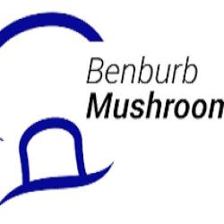 Benburb Mushroom