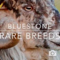 Bluestone Rare Breeds