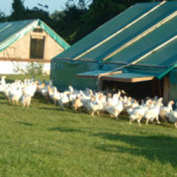 Otter Valley Poultry
