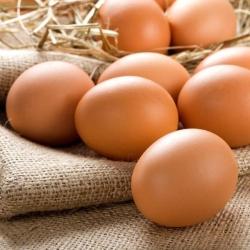 David Bruce Eggs Ltd