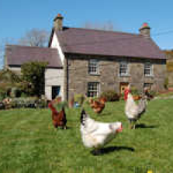 Nantgwynfaen Farmhouse Bed and Breakfast & Organic Farm Shop B&B Wales