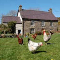 Nantgwynfaen Farmhouse Bed and Breakfast & Organic Farm Shop B&B Wales