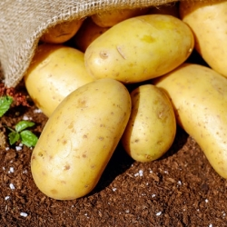 Barker Potatoes
