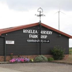 Roselea Nursery
