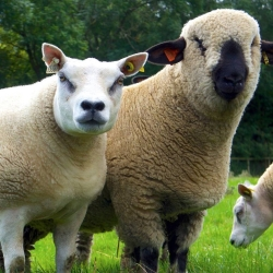 Raisdale Livestock