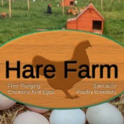 Hare Farm