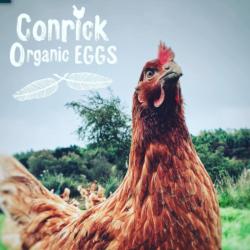Conrick Organic Eggs