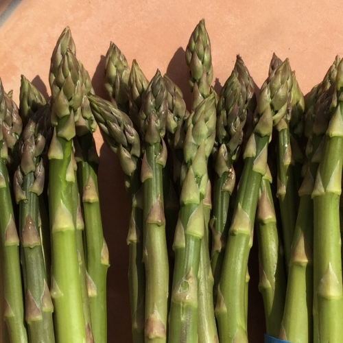 1 bunch of Purple Asparagus spears