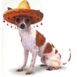 Mexican Chihuahua's