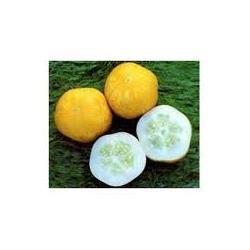 Crystal Lemon Cucumber Seeds