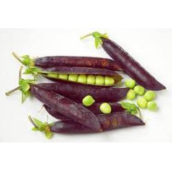 Purple Podded Pea Seeds