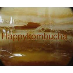 Organic Kombucha Mother Scoby