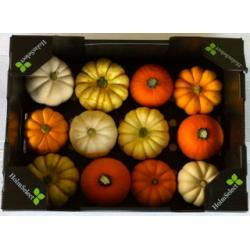 Mini Pumpkin Mix 5kg