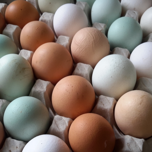 6 free range eggs mixed sizes and colours
