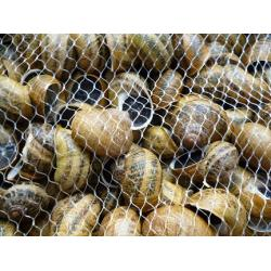 One day Course in Farming snails