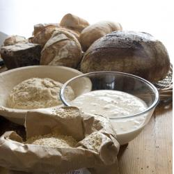 Intro to Wild Yeast and Sourdoughs